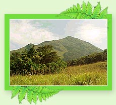 Chembra Peak - Hill Stations in Kerala
