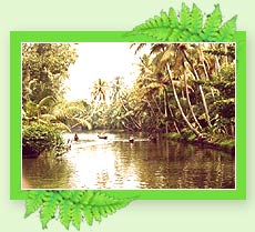 Kumarakom Backwaters - Kerala