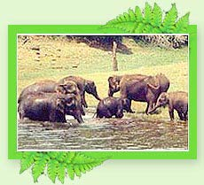 Idukki Wildlife Sanctuary - Kerala