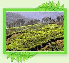 Munnar Hill Stations - Kerala