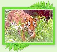 Periyar Tiger Reserve - Kerala