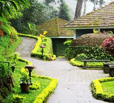 Tall Trees Hill Resorts