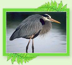 Munnar Wild life santurey - Munnar