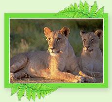 Periyar Wildlife Sanctury - Periyar